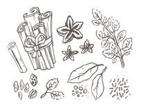Herbs and Spices. Hand drawn vector illustration set. Engraved style flavor and condiment drawing. Botanical vintage royalty free illustration