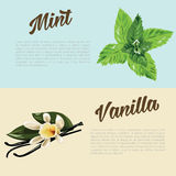 Herbs and spices with hand painted food objects: mint and vanilla. Kitchen herbs and spices banner. Stock Photos