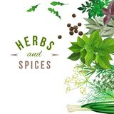 Herbs and spices Royalty Free Stock Photos