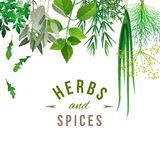 Herbs and spices. Highly detailed herbs and spices over white background Stock Photo