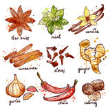 Herbs And Spices Icons Set Stock Images