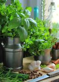 Herbs and spices in the kitchen Stock Images