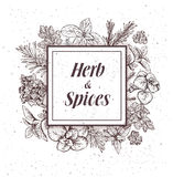 Herbs and spices label. Engraving illustrations for tags. Stock Images