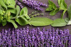 Herbs and spices. Lavender flowers and aromatic green herbs royalty free stock images