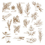 Herbs, spices and leaf vegetable sketch poster Stock Photo