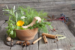 Herbs and spices in mortar. On wooden boards Royalty Free Stock Photos