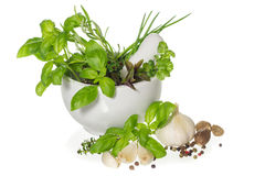 Herbs and spices in mortar Royalty Free Stock Photos
