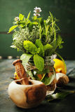 Herbs and spices with Mortar and Pestle Stock Photos