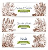 Herbs and spices organic plant sketch banner set. Herbs and spices organic plant sketch banners. Basil, pepper and mint, rosemary, cinnamon and parsley, anise Royalty Free Stock Photo