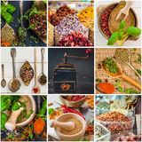 Herbs and spices. Photo collage of herbs and spices Stock Images