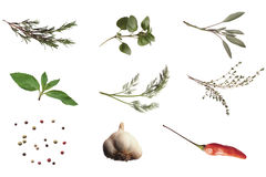 herbs and spices poster Stock Image