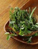 Herbs spices (rosemary, thyme, oregano) Stock Photos