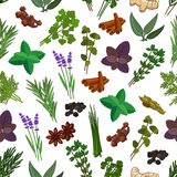 Herbs and spices seamless pattern Stock Images