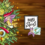 Herbs and spices. Set of beautiful hand drawn vector illustration of culinary herbs vector illustration