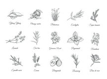Herbs and spices set. Collection sketch plants Stock Photo