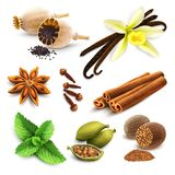 Herbs and spices set Stock Photos