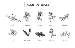 Herbs and spices set. Medicinal herbs. royalty free illustration