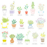 Herbs and spices set in pots with flowers vector illustration
