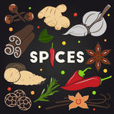 Herbs and spices set Stock Image