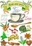 Herbs and spices, tea set, Tea leaves for tea preparation, vintage vector graphic with herbs Royalty Free Stock Image