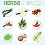 Herbs and spices in vector border frame Royalty Free Stock Photo