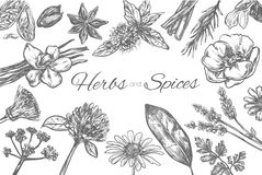 Herbs and Spices vector template. Frame in sketch style. Hand drawn. Illustration Royalty Free Stock Image