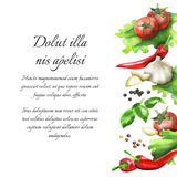 Herbs and spices. Watercolor background. And template Stock Illustration