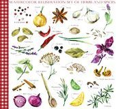 Herbs and spices watercolor illustration set. Herbs and spices watercolor hand drawn illustration set stock illustration