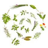 Herbs spiral, isolated. Spiral from different fresh herbs, isolated stock photos