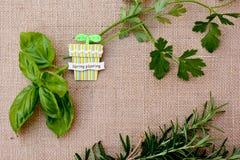 Herbs - spring planting Stock Photos