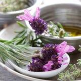 Herbs Still Life Stock Photography
