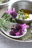 Herbs Still Life Stock Photo