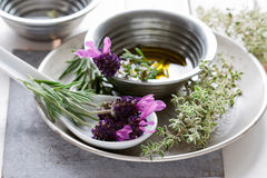 Herbs Still Life Royalty Free Stock Image