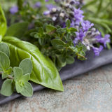 Herbs Still Life. With oregano, lavender, rosemary, thyme, sage and basil Royalty Free Stock Image