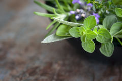Herbs Still Life. With oregano, lavender, rosemary, thyme, sage and basil, over blurred background Stock Photography