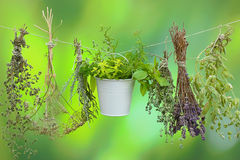 Herbs on a string Royalty Free Stock Photography
