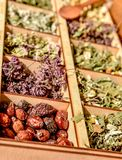 Herbs for tea . Herbs and tea collection . royalty free stock photo