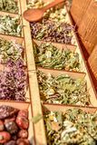 Herbs for tea . Herbs and tea collection . stock images