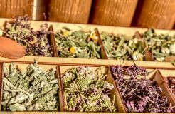 Herbs for tea . Herbs and tea collection . stock photo
