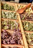 Herbs for tea . Herbs and tea collection . Herbs and tea collection . Herbs and tea at counter royalty free stock images