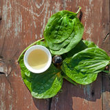 Herbs tea and tincture from leaves of plantain on wooden table. Herbal Medicine. Top view stock photography