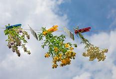 Herbs and teabags hanging on the line. Herbs and teabags with clothespin hanging on the line Stock Image