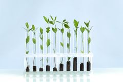 Herbs in test tubes on background. Herbs test tubes image horizontal decoration herbal Stock Photo