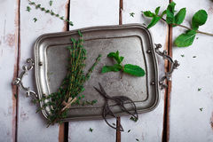 Herbs thyme and mint on a tray Stock Photography