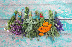 Herbs tied in bundles and hanged to dry on wooden wall royalty free stock photo