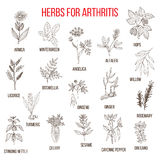 Herbs to fight arthritis boswellia, willow, celery, ginger, arnica, wintergreen, andelica, alfalfa, hop, licorice Royalty Free Stock Photos