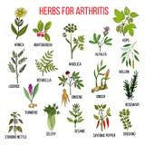 Herbs to fight arthritis boswellia, willow, celery, ginger, arnica, wintergreen, andelica, alfalfa, hop, licorice Royalty Free Stock Photo