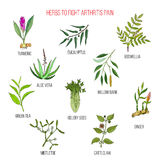Herbs to fight arthritis pain turmeric, eucalyptus, boswellia, aloe vera, willow, celery, tea, mistletoe, ginger, cat Royalty Free Stock Photos