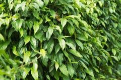 Herbs tree farm Royalty Free Stock Photography