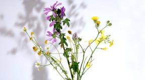 herbs various Στοκ Εικόνα